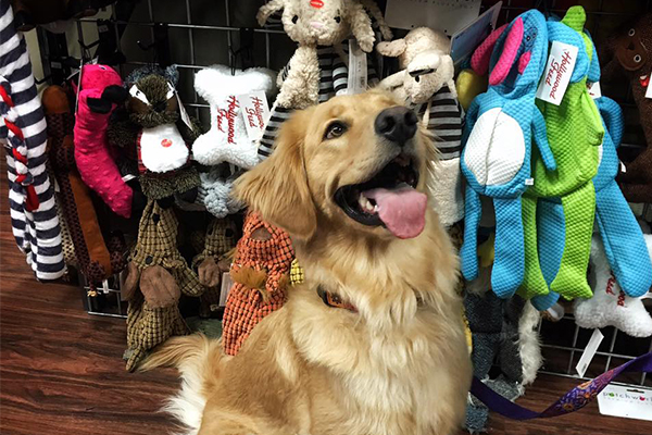 Hollywood Feed photo of dog with toys