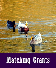 Button to Matching Grants Page