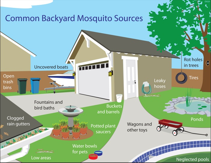 Home Mosquito Sources